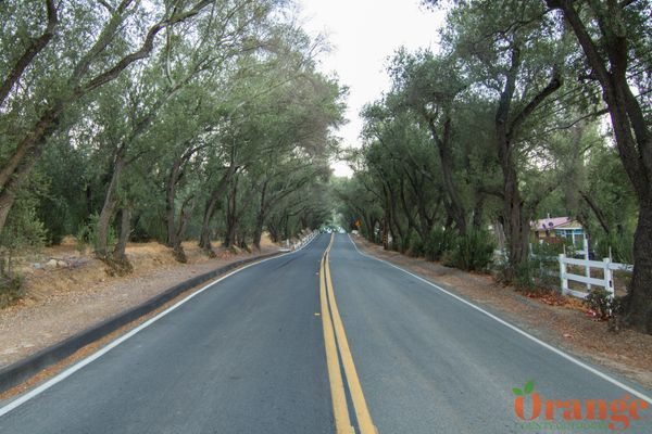 Modjeska Canyon Road