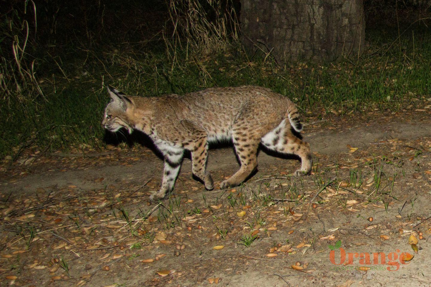 Animals of Orange County - Orange County Outdoors
