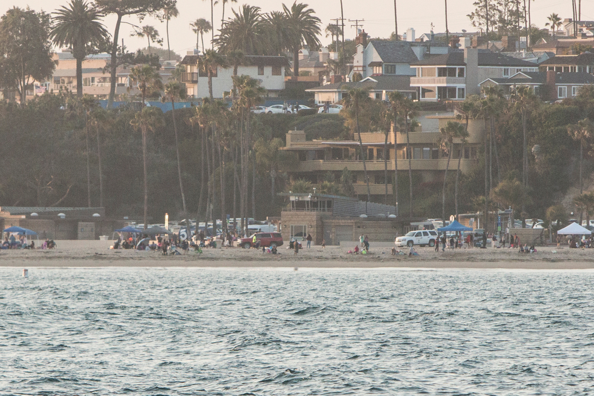 Shark Attack in Newport Beach
