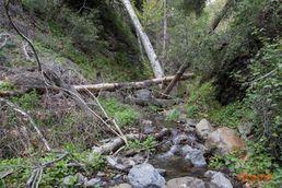 Falls Canyon