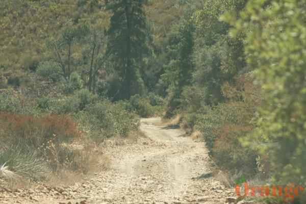 Maple Springs Road