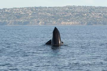 Orca - blog