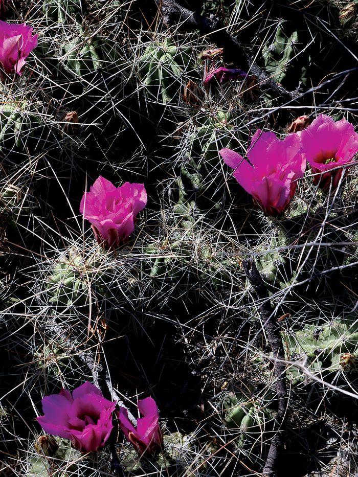 BB.2019.flowers03.jpg