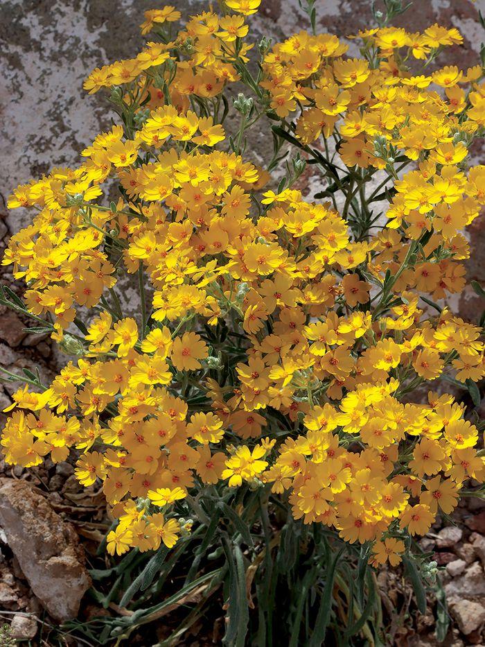 BB19.yellowflower01.jpg
