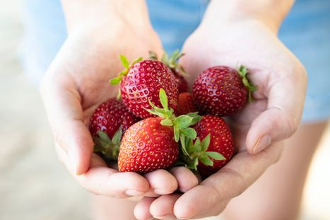 pick your own fruit farms in the Triangle