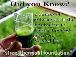 Facts about Wheatgrass