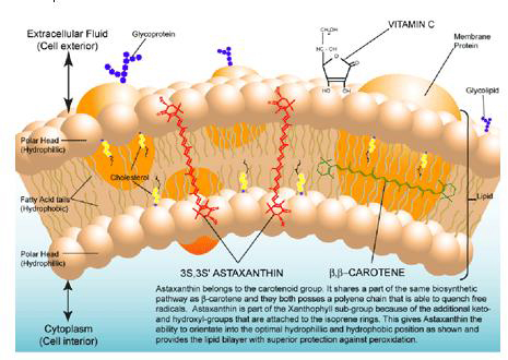 Astaxanthin carotenoids