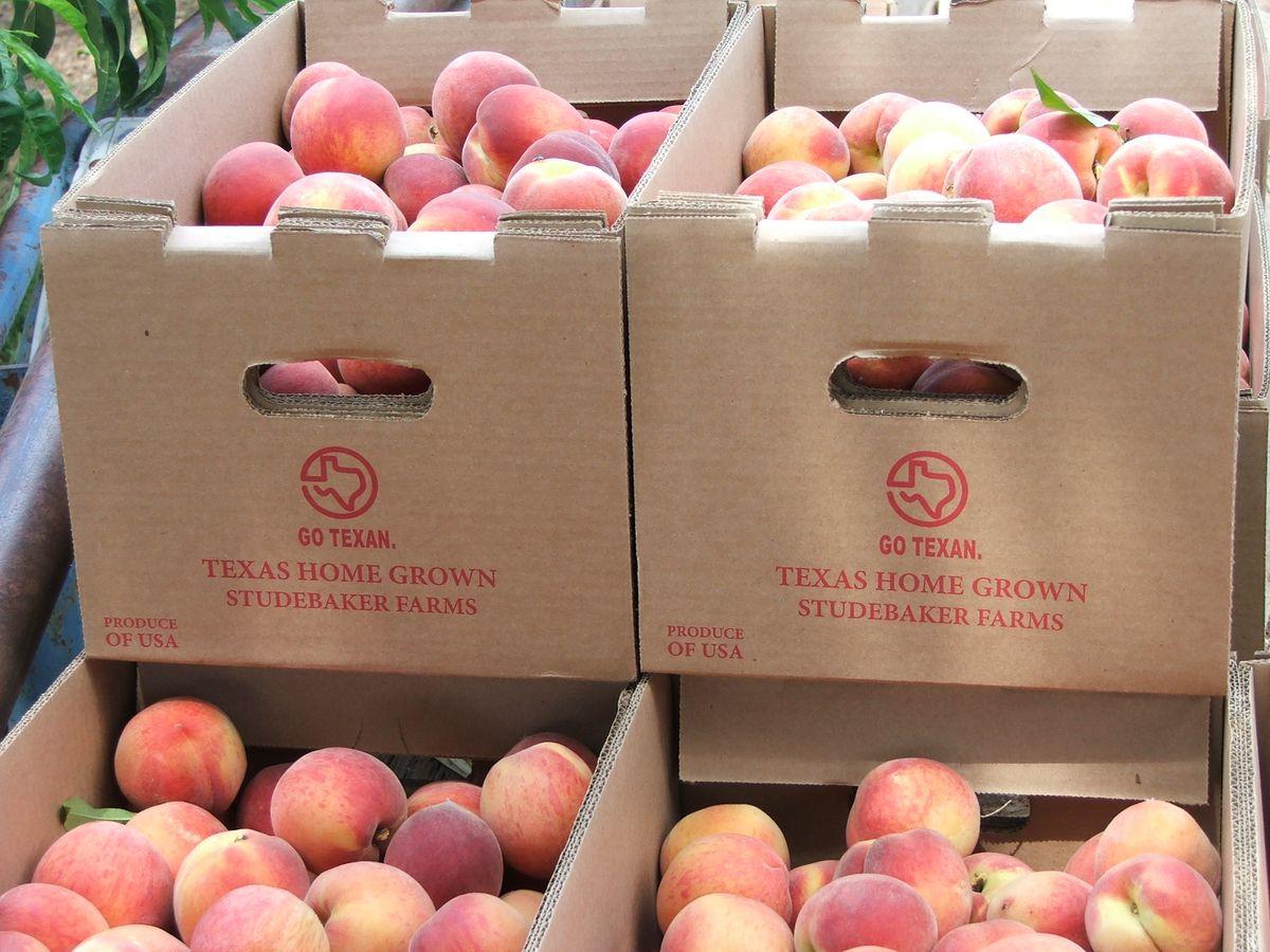 2010 Peach Harvest 002.jpg