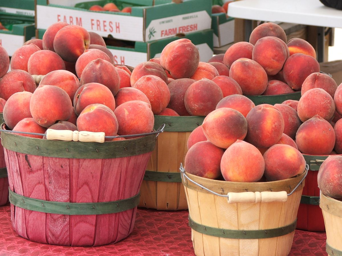 2010 Peach Harvest 019.jpg