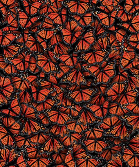 Monarchs.png