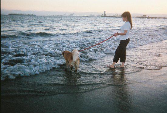 rosie-s-dog-beach (1).jpg