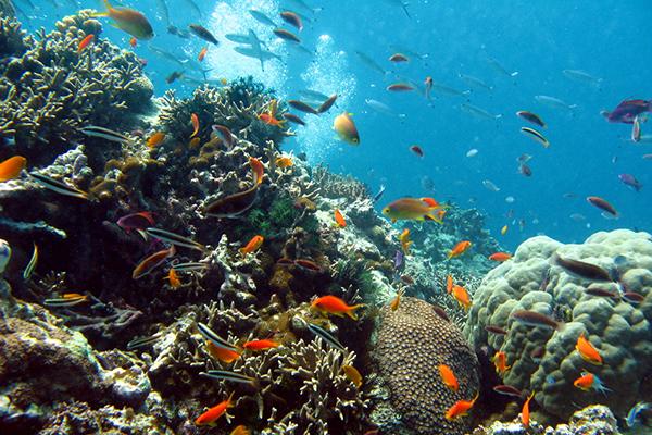 reef5.jpg