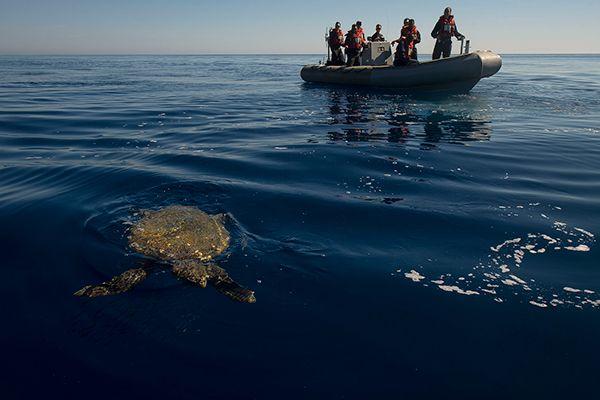 turtle8.jpg