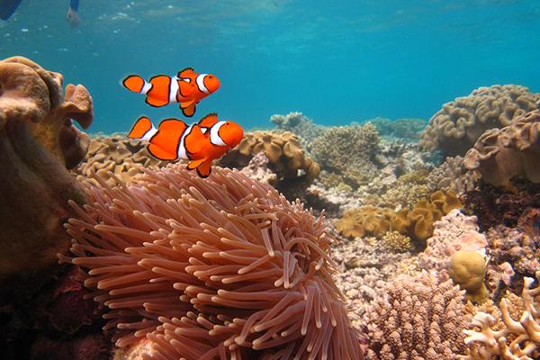 reef3.jpg