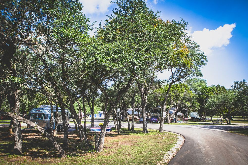 Trees at the Canyon Lake RV Park