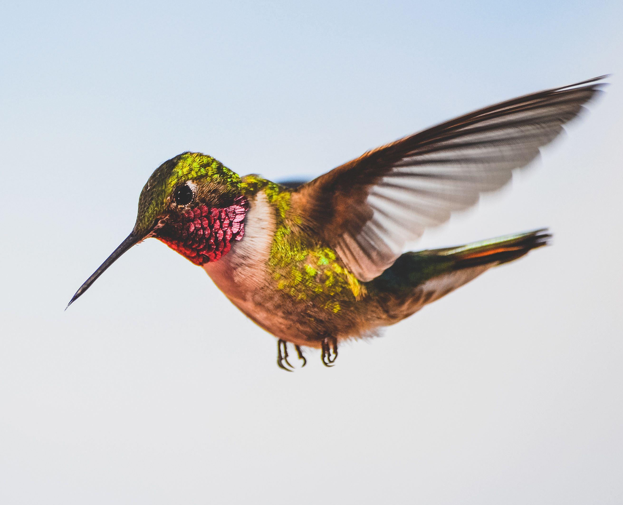 Canva - Photo Of A Hummingbird-1.jpg