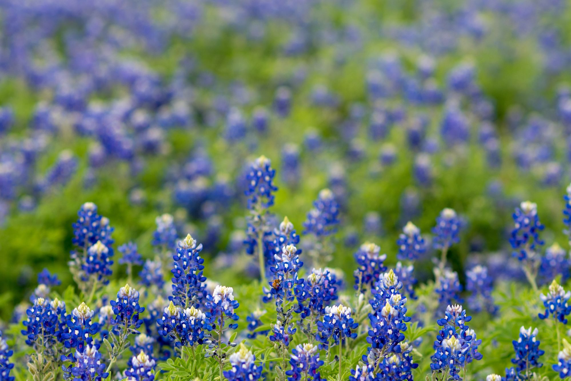 Blue Bonnet Campground in Texas Hill Country