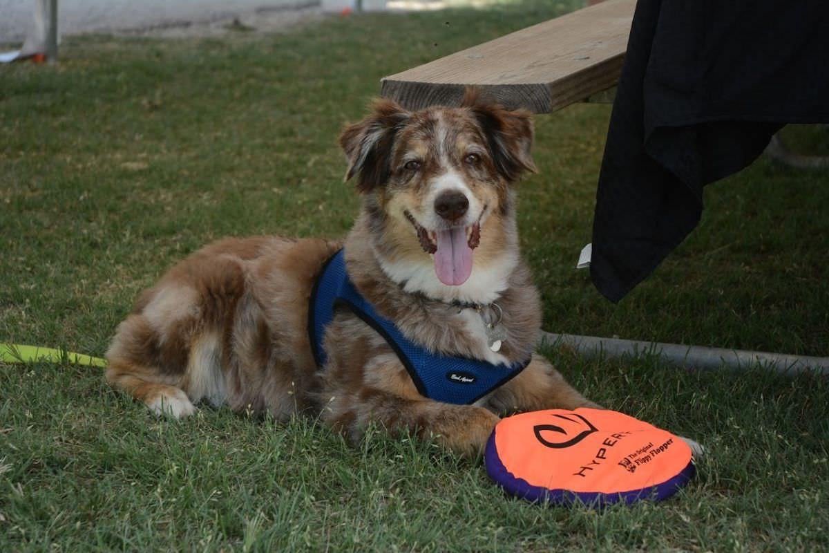 Pints-n-Pups Dog
