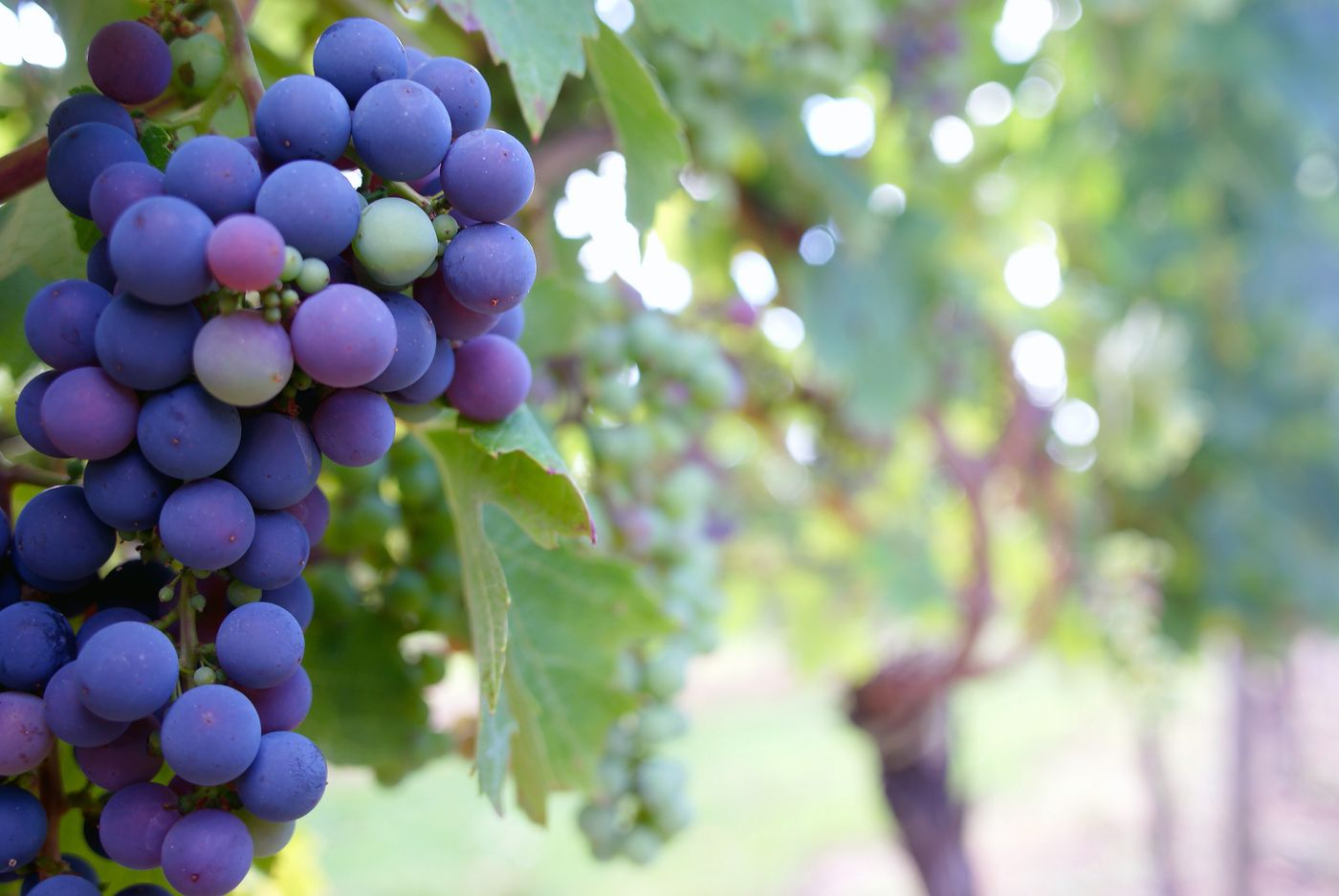 Best Texas Winery Tours