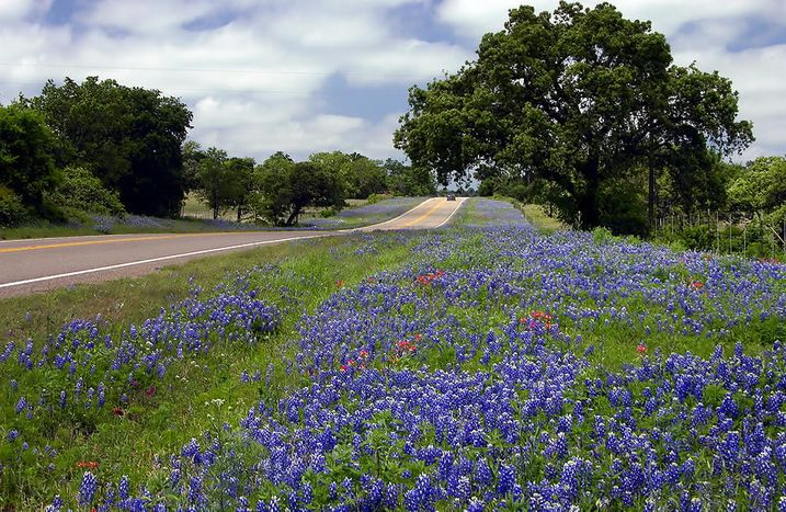 Heart Of Texas Wine Tours