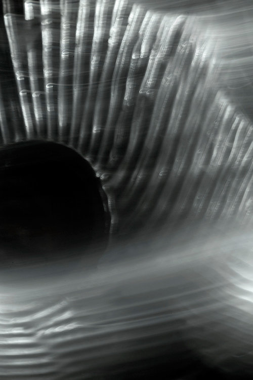 Untitled No.4 2009, Black and White Abstract Photography, Shirine Gill