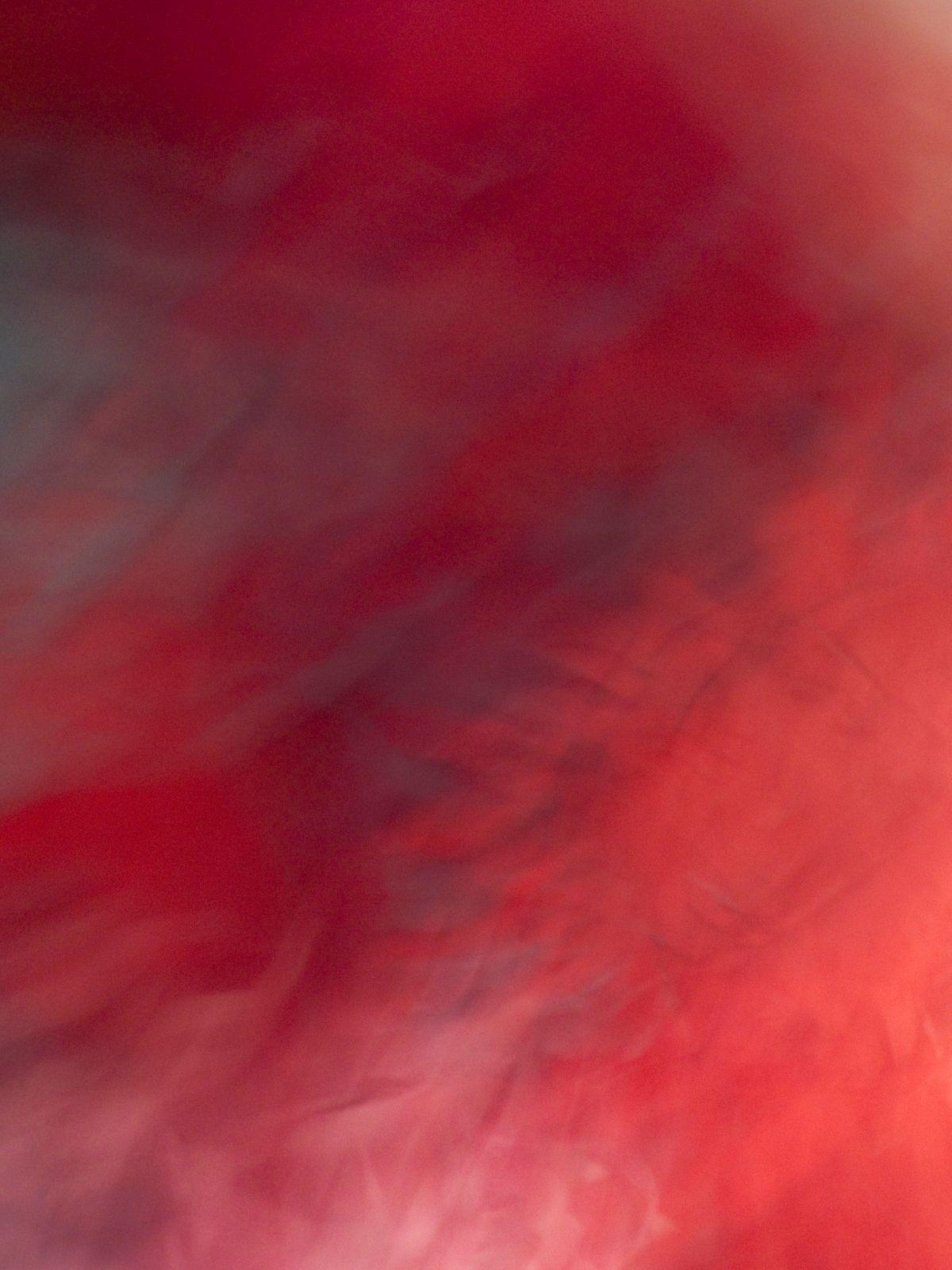 La Vie en Rose, 2012, Abstract Color Photography, Shirine Gill