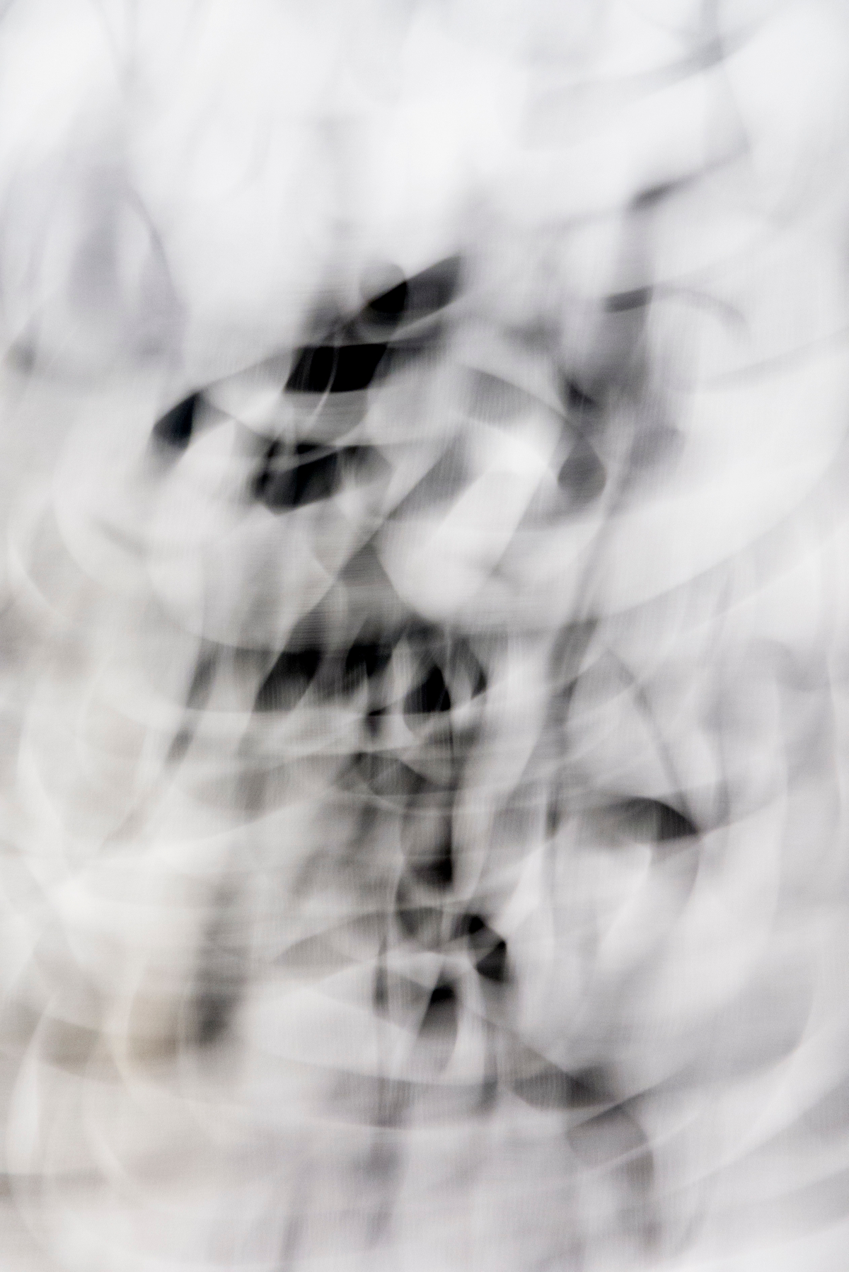Untitled, 2013, Black and White Abstract Photography, Shirine Gill