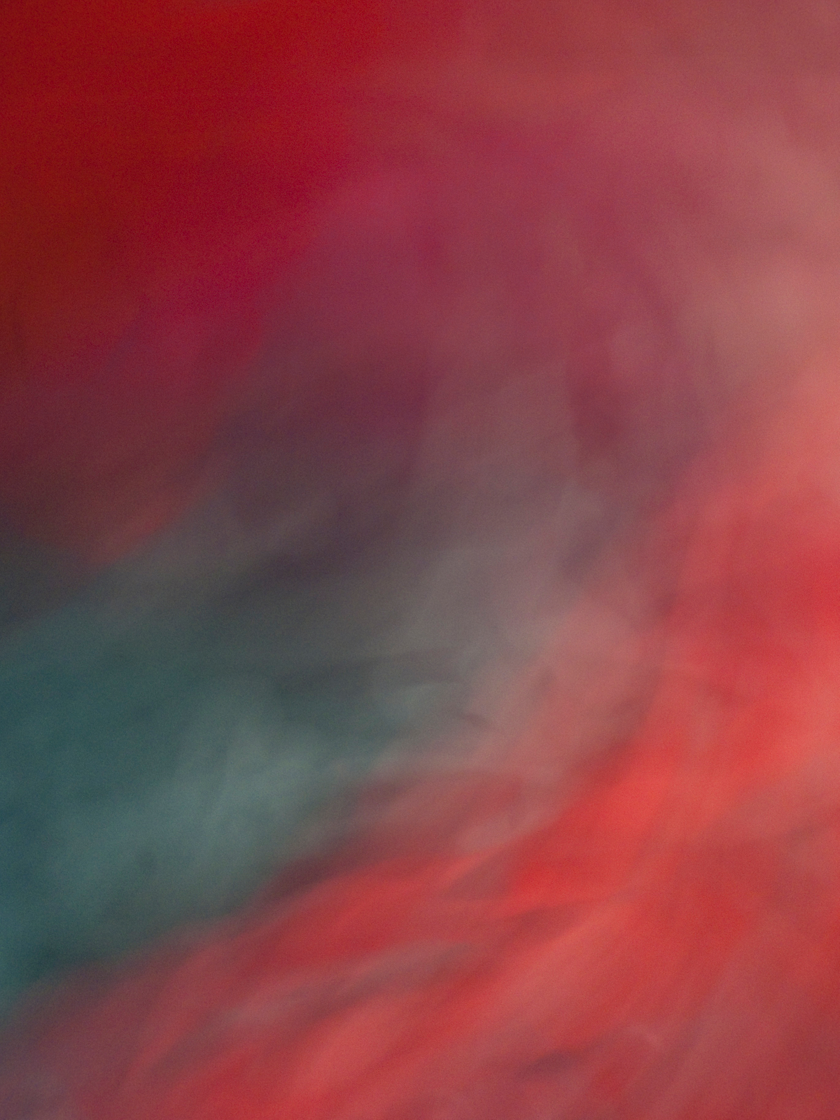 La Vie en Rose, 2012, Abstract Color Photography, Shirine Gill