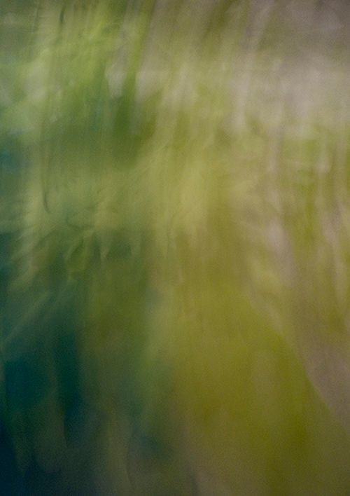 Ganja Dreams, 2012, Abstract Color Photography, Shirine Gill