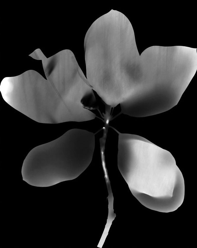 Botanique, Black and White Abstract Photography, Shirine Gill