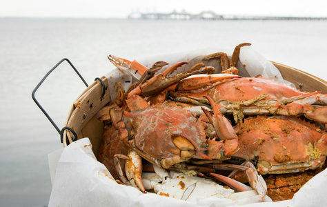 Chesapeake Bay Beach Club Crabfeast
