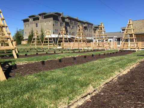 Planting Hops At The Inn