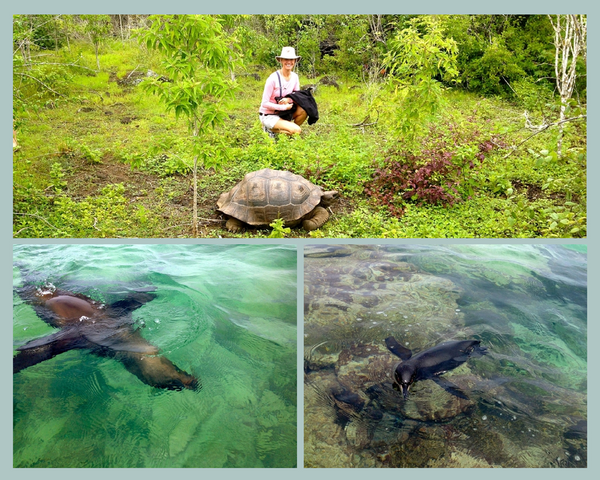 Ecuador Wildlife.png