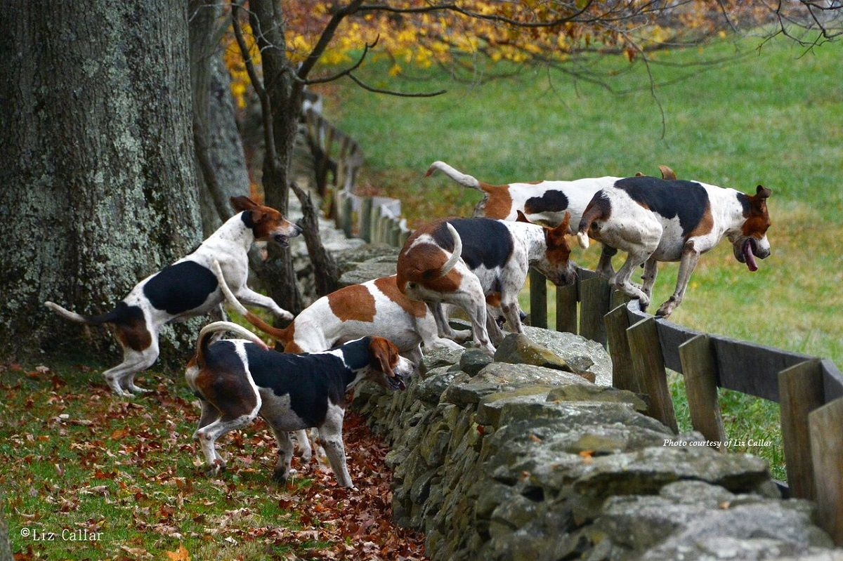 Blue_Ridge_Farm_Hounds_Piedmont_2016_8x12_preview.jpg