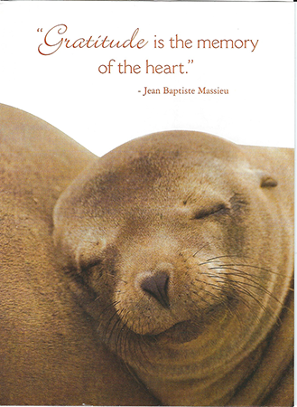 sealthanks.png