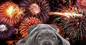 Fireworks dogs.jpg