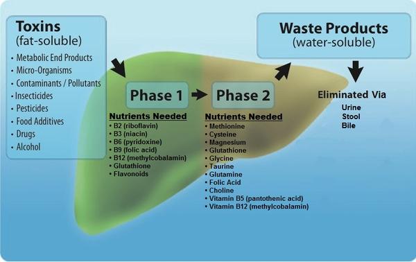 1-16-2018 Detoxification pathway.jpg
