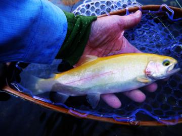 fish4.jpg