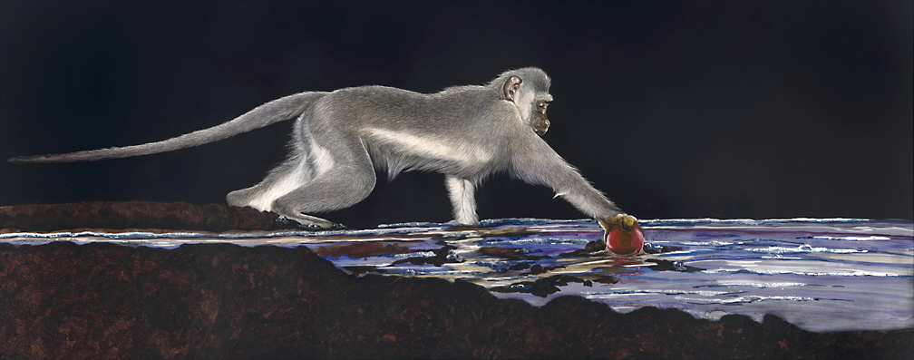 monkey finding the red ball.jpg
