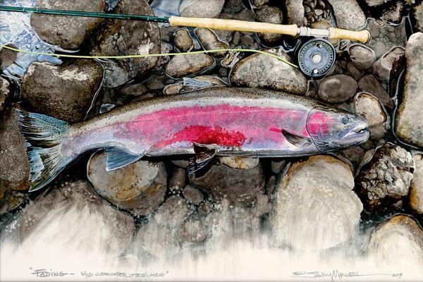 Fading Wild Clearwater Steelhead 36x24.jpg