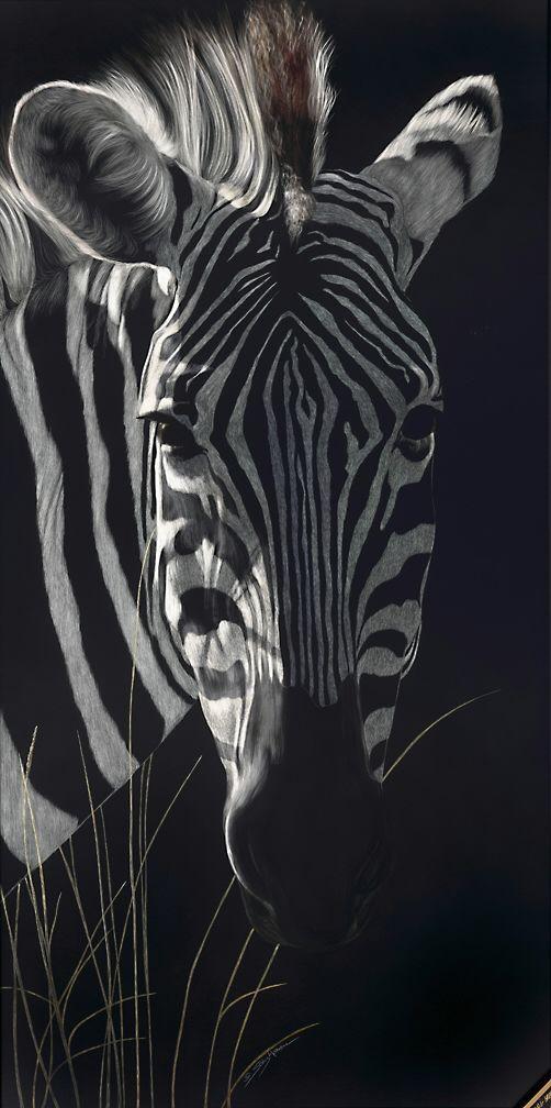 zebra in the longgrass_rgb.jpg