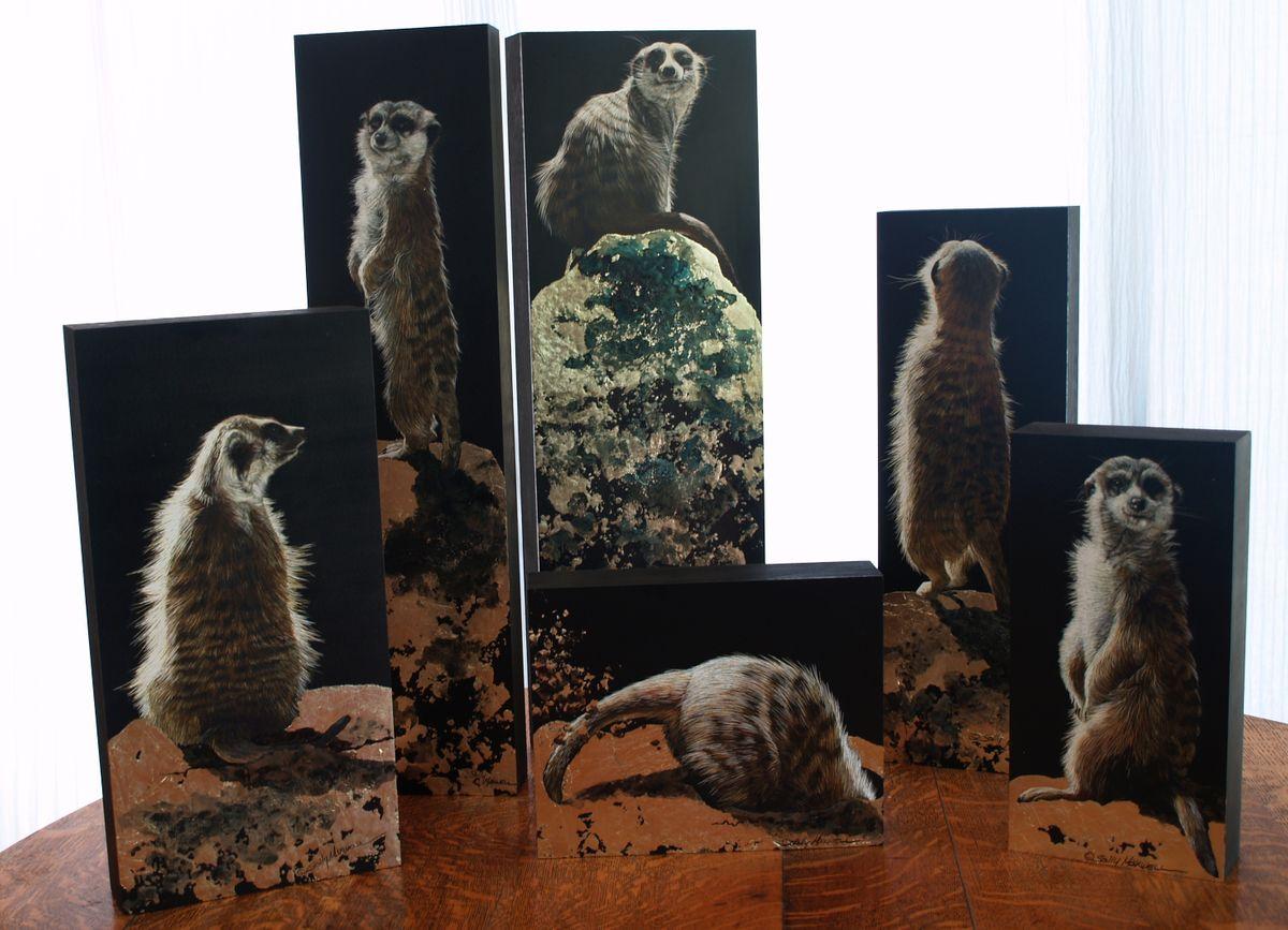meercat boxes.jpg