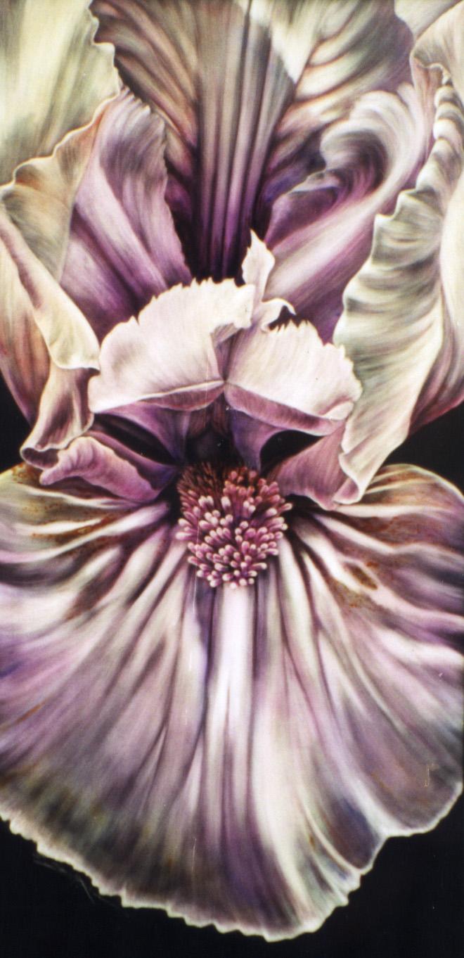 fa iris. orchid iris.jpg