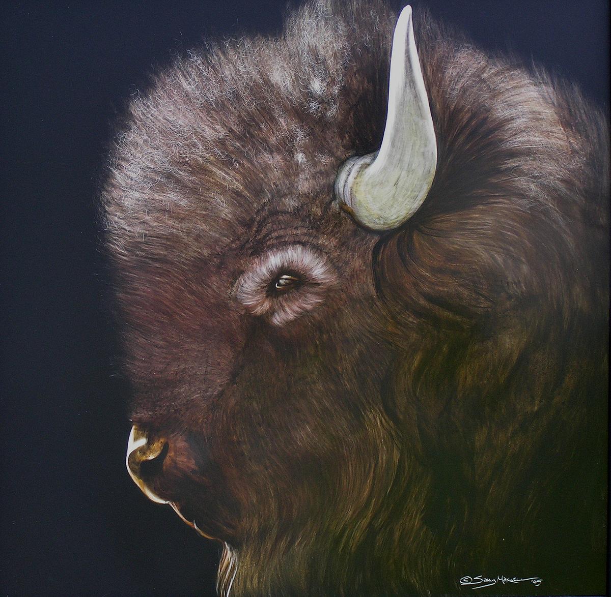 profile of a young buffalo.jpg