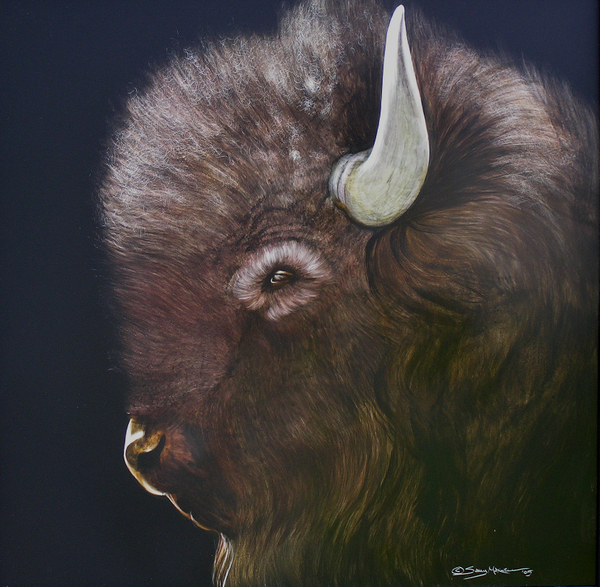 profile of a young buffalo.jpg