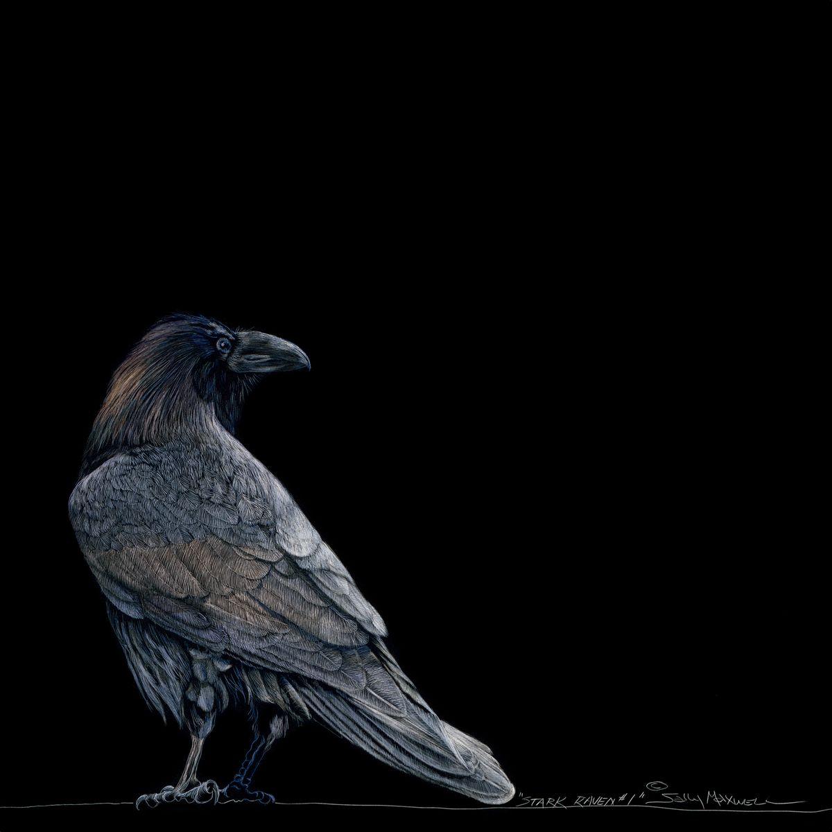12x12 Stark Raven Black.jpg