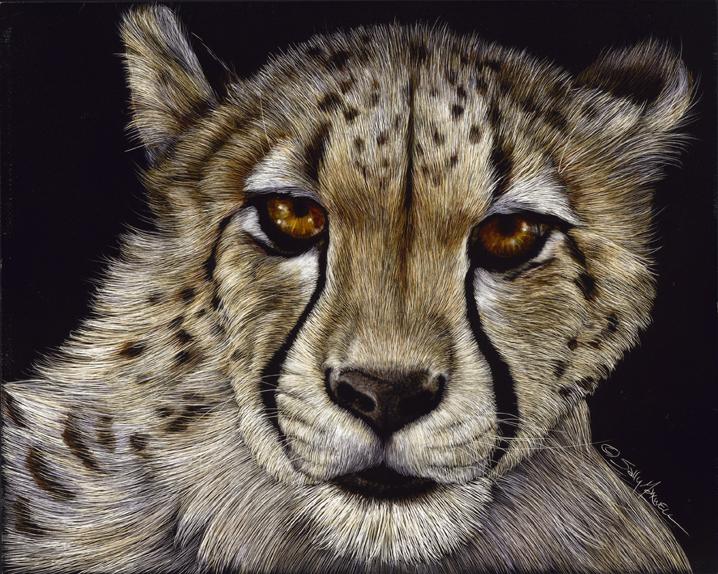 cheetah face.jpg