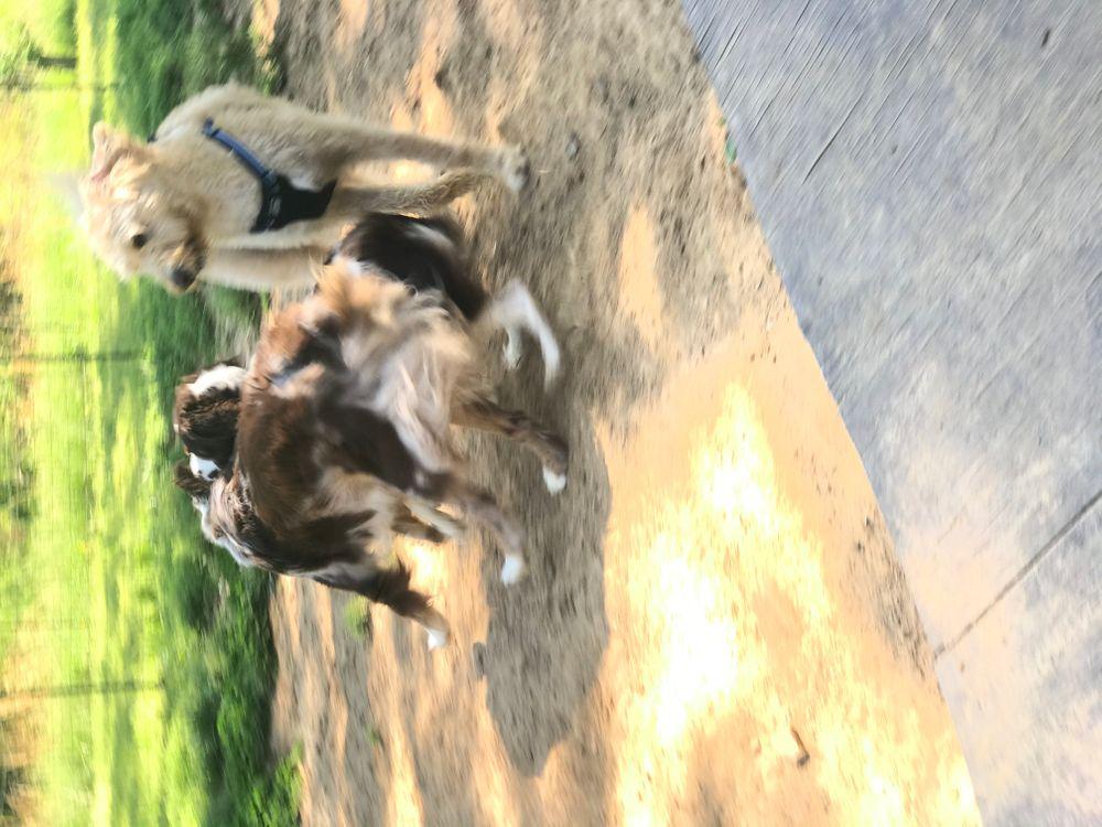 Dog boarding & daycare Dexter, KY