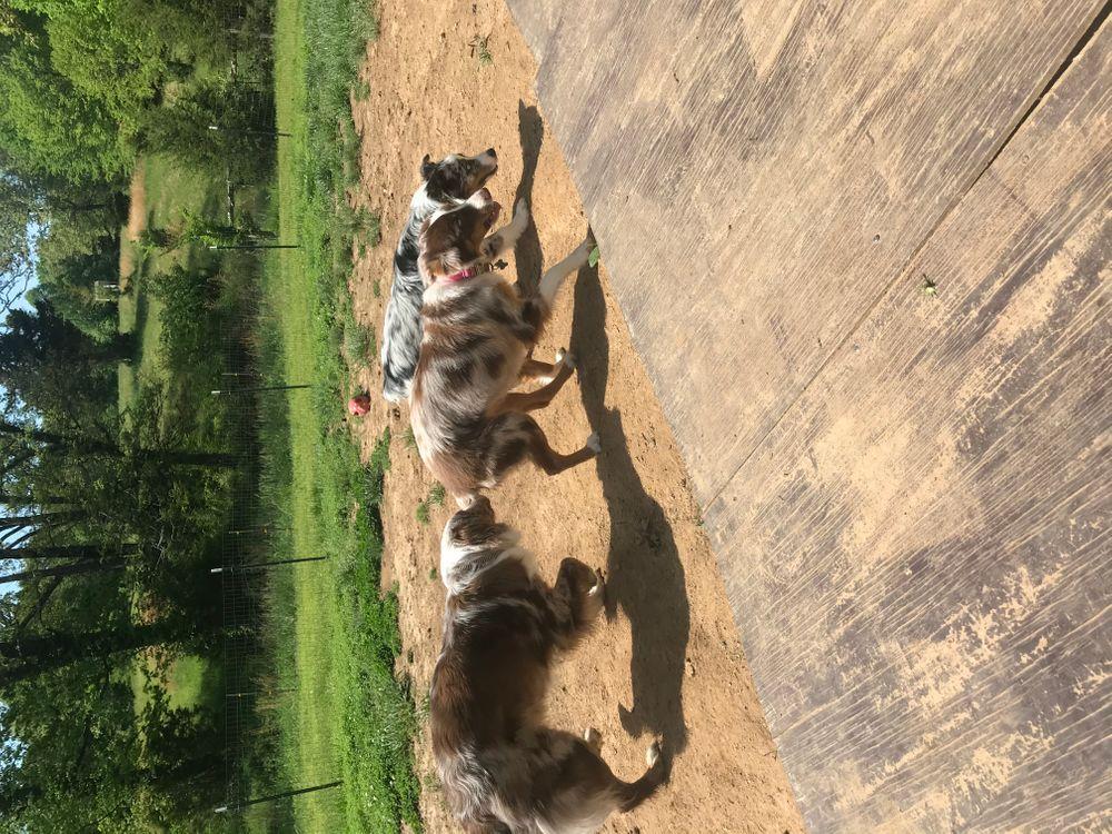 Dog boarding & Daycare Murray, KY