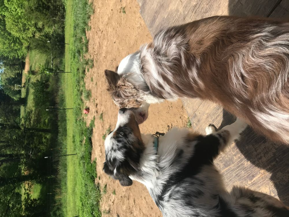 Doggie daycare Murray, KY